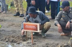 Bupati Lobar H. Fauzan Khalid tanam mangrove di Dusun Madak, Cendi Manik, Sekotong.