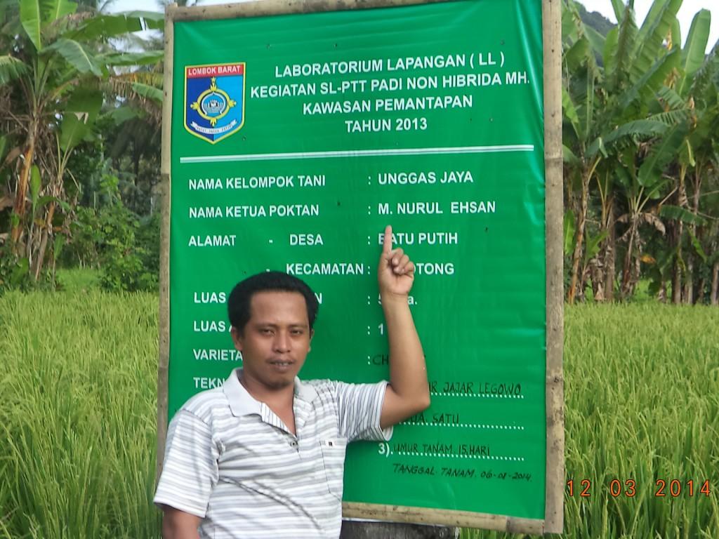 foto ihsan petani berprestasi tingkat nasional asal      Sekotong