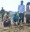 HUT TNI ke 74 di Lobar, Hijaukan Pantai Cemare dengan Tanam Mangrove
